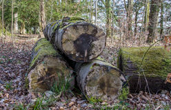 Logs in the Woods Royalty Free Stock Photography