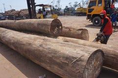 Logs Stock Photos