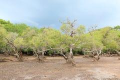 Loh Buaya National Park, Indonesia Stock Photography