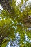 Loi en bambou Image libre de droits