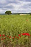 Loire field Stock Image