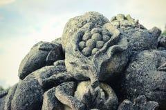 Loire frukt Fotografering för Bildbyråer
