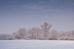 Loire hoarfrost Stock Photography