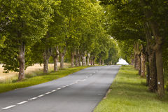 Loire tree avenue Stock Images