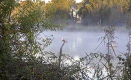 Loire widok rzeczny bagno Fotografia Stock