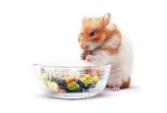 Lois o hamster imagem de stock