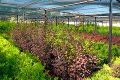 A loja da planta imagens de stock royalty free