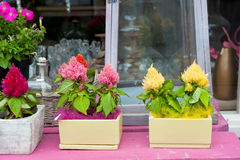 Loja de flor Foto de Stock
