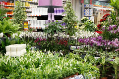 Loja de jardinagem fotografia de stock royalty free
