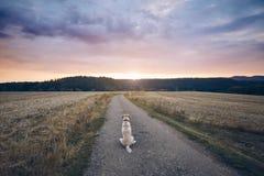 Lojal hund som väntar på solnedgången royaltyfri foto