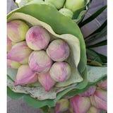 Lojalni lotuses Obraz Royalty Free