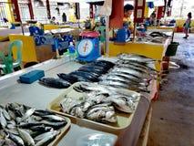 Lokal fiskmarknad i Mamburao, Mindoro royaltyfria foton