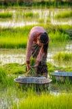 Lokal flickaworkin i Don Kong, 4000 öar, Laos arkivbild