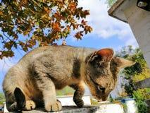 Lokal katt arkivfoto