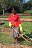 Lokal kvinna som arbeta i trädgården i Sigiriya trädgårdkomplex Arkivbilder