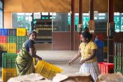 Lokal kvinna som arbeta i trädgården i Sigiriya trädgårdkomplex Royaltyfri Bild