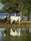 Lokal man som arbetar på ett lantgårdfält nära sjön, Amarapura, Myanmar Royaltyfria Foton