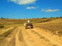 Lokal man som rider en oxevagn inte långt från den Kalaw byn i Myanmar Arkivfoto