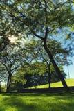 lokal park Fotografering för Bildbyråer