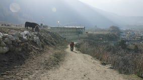 Lokala bönder bär tunga vide- korgar på huvuden i Nepal Manaslu område lager videofilmer
