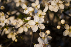 Lokala blommor royaltyfria foton