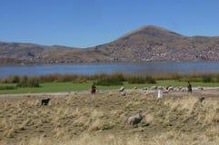 Lokala farmworkers ansar en flock av får bredvid sjön Titicaca arkivfoton