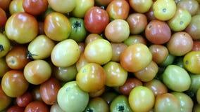 Lokala tomater Fotografering för Bildbyråer