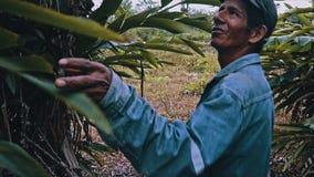 lokale Boliviaanse landbouwer die rond zijn tuin het inspecteren bomen kijken royalty-vrije stock afbeelding