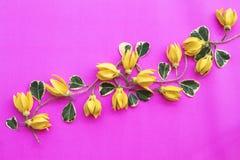 Lokale flora van kananga-olie de gele bloemen van Azië stock foto