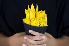Lokale flora van kananga-olie de gele bloemen van Azië royalty-vrije stock afbeelding