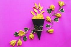 Lokale flora van kananga-olie de gele bloemen van Azi? royalty-vrije stock foto