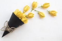 Lokale flora van kananga-olie de gele bloemen van Azi? royalty-vrije stock fotografie