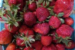 Lokale frische reife Erdbeeren vom lokalen Frischwaremarkt Lizenzfreies Stockbild