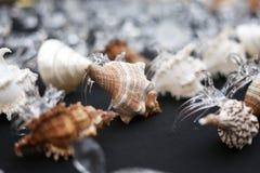 Lokale giftwinkel het verkopen inzameling van overzeese shells Stock Foto