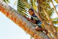 Lokale jongen die palm beklimmen aan schommeling op een kabelschommeling in Lavena Royalty-vrije Stock Afbeelding