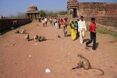 Lokale Leute, die um Ranthambore-Fort unter grauem Langur gehen Stockbild