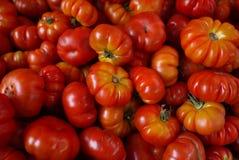 Lokale tomaat stock foto's