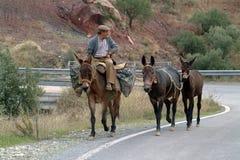 Lokale travells durch Esel Lizenzfreie Stockbilder