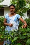 Lokale vrouw die in een theefabriek werken Rambukkana Sri Lanka stock afbeelding