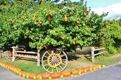 Lokaler Fruchtshop, Händler in Princeton, Britisch-Columbia Nette Dekoration mit Kürbis, groud, Früchte auf Weinlesetraktor, klas Lizenzfreies Stockfoto