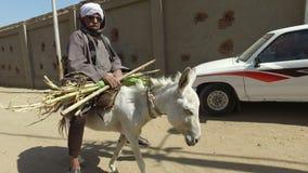 Lokaler Mann auf Esel tragen Zuckerrohr stock video footage