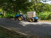 Lokaler Mann fährt Ackerschlepper-LKW auf Straße Stockbild