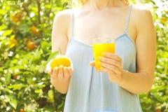 Lokaler Orangenbaumgarten des Erzeugnisses, Sonnenlicht Erntend, kleidet Fruchtsammeln, weiblicher Landwirthippie Perfekte Orange lizenzfreies stockbild