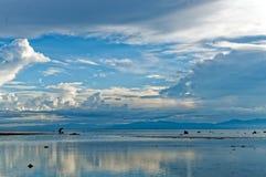 Lokaler söker efter havsskal under ett lågvatten Arkivfoton
