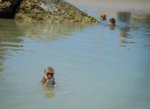 Lokales wildes Affeschwimmen Hua Hin Beach Lizenzfreie Stockfotografie
