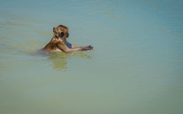 Lokales wildes Affeschwimmen und Spiel Hua Hin Beach Lizenzfreies Stockbild