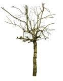 Lokalisiert starb Baum durch Flut Lizenzfreie Stockfotografie