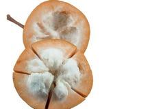 Lokalisiert von der Mangostanfrucht auf weißem Hintergrund Lizenzfreie Stockfotografie