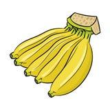 Lokalisierte Bananenkarikatur - Vektor-Illustration Lizenzfreie Stockbilder