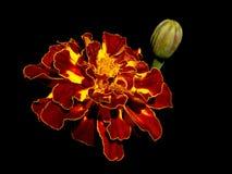 Lokalisierte Blume Lizenzfreies Stockfoto